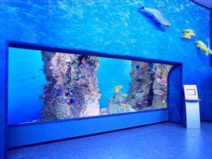 Esposizione barriera corallina al museo civile di zoologia