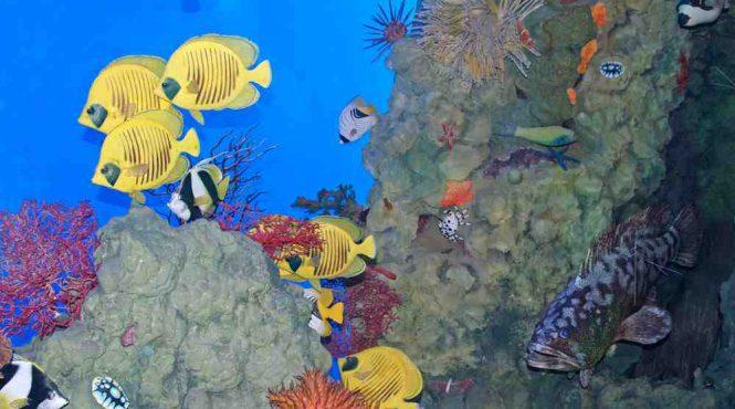 Museo civico di zoologia di Roma: esposizione barriera corallina