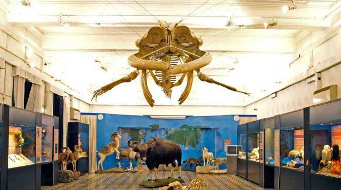 Museo civico di zoologia di Roma: sala della balena
