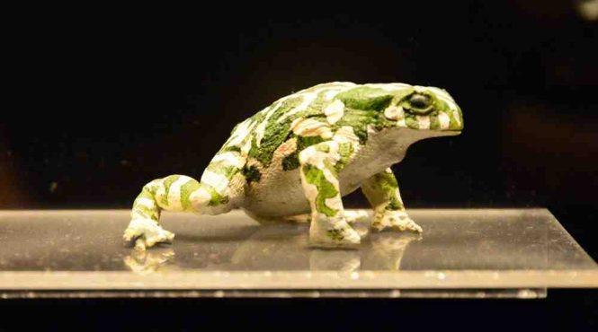 Museo civico di zoologia di Roma: sala dei rettili e degli anfibi
